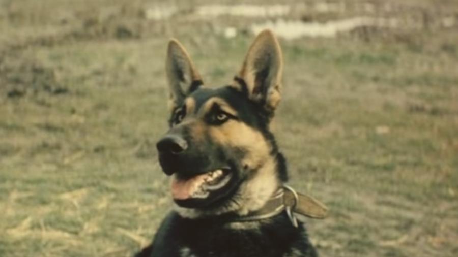 Пограничный пёс Алый