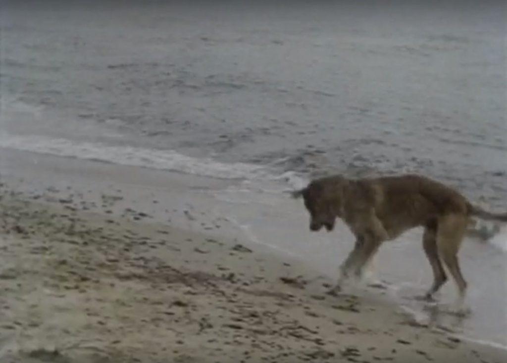 Солёный пес